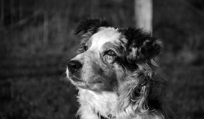 Hôtel Canin - Pension Canine de Julie Chillac Charente
